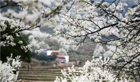 走,去西乡,福星居邀您共赴这场春天的盛宴