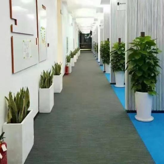 给我一片空间,还您一份绿色家园 北京溪竹苑绿植花卉租摆养护专家