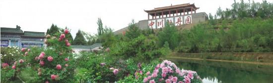 中国牡丹的骄傲——高寒牡丹的-43℃之路