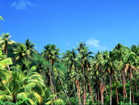 愛喝椰子汁的你,知道世界上第一個吃椰子的誰嗎?