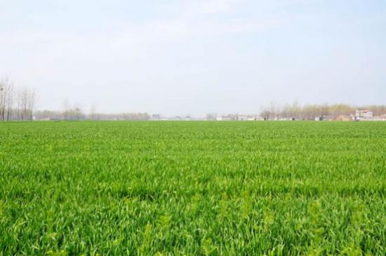 纯敬飞翔鸡未售先火:源于家家农业对品质的极致追求