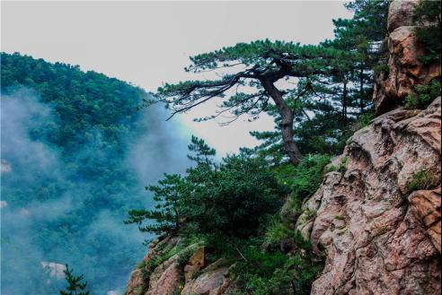山东暑假旅游看这里!沂山森林公园送你一夏清凉