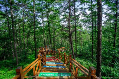 沂山森林公园好不好?夏日的美好全部都给你