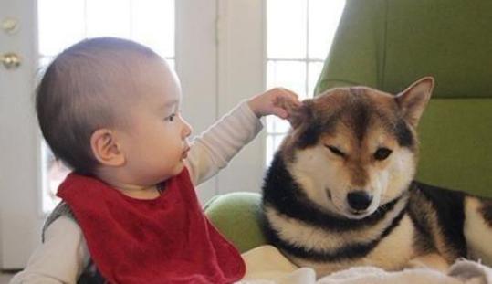 千萬別讓寶寶跟這只狗接觸,否則……