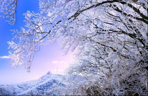 """沂山到了这个季节最好的时候,漫山""""梨花""""朵朵"""
