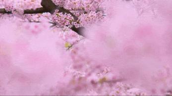 电建地产·洺悦府X洺悦御府 | 春日摄影大赛火热开启,拍拍拍赢取惊喜好礼