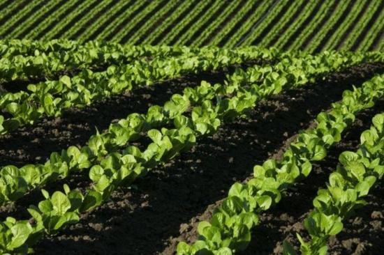 关于复合肥的优缺点及施用方法,高质量大品牌史丹利告诉你