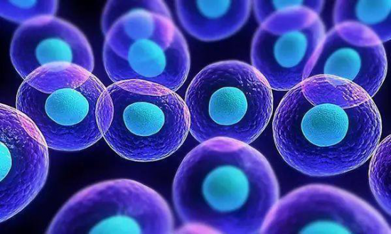 过敏,原来是免疫细胞惹的祸,没事,益生菌可以帮助恢复