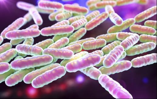 益生菌竟然也會餓?它是吃什么長大的呀?進來告訴你