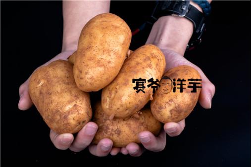 金九银十创业季云南小吃加盟赛爷洋芋强势爆发