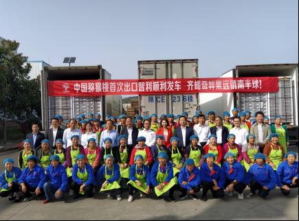 中国猕猴桃首次出口智利,齐峰奇异果远销南半球