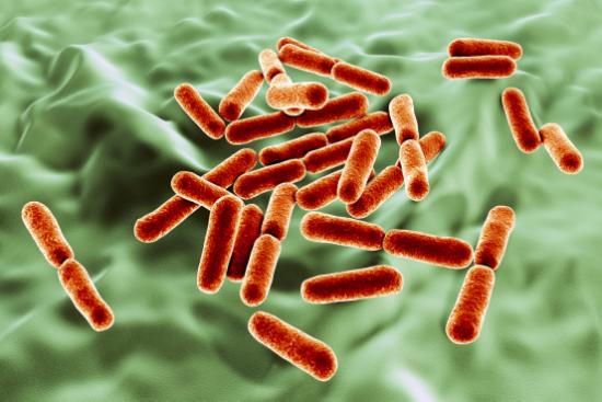 婴幼儿过敏高发,来说说细菌,是如何预防过敏的?