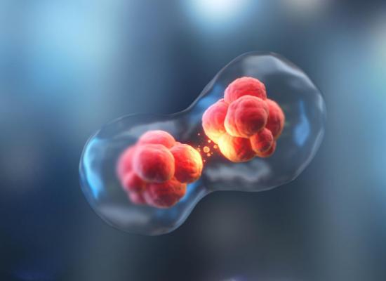 经常过敏惹人烦!面对过敏,抗过敏益生菌是如何发挥作用的?
