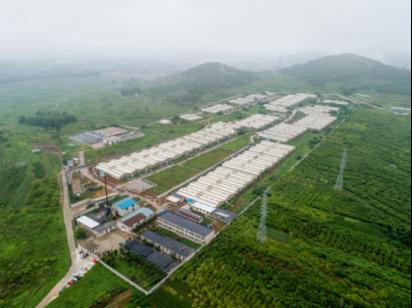金锣加强上游产业链建设,发力规模化养殖