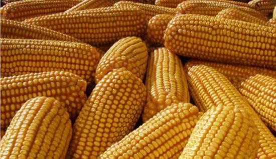 以质取胜 从齐鲁粮油公共品牌看中国粮食现状