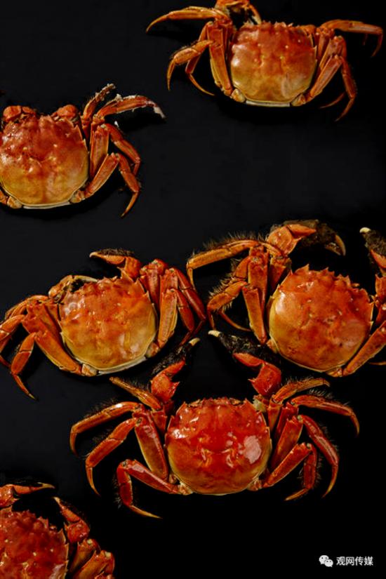 与活水蟹的鲜甜相遇,来一场美味与创富的盛宴