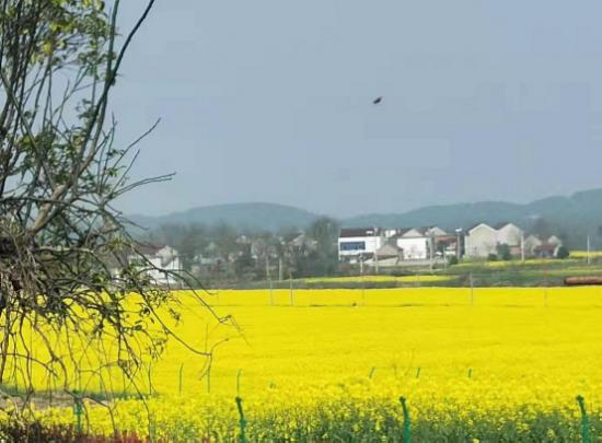 安徽省宝天农贸有限公司榨油匠用他的故事讲述了一个做为男子汉的责任