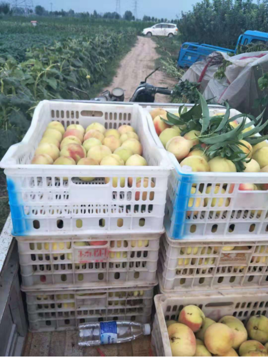 卜集镇:电商思维推动特色农业转型升级